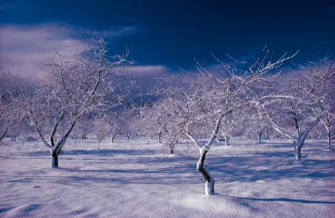 winter-pic